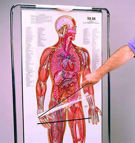 Анатомическое учебное